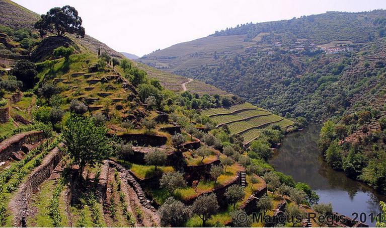 O Vale do Douro, às margens do rio Douro, onde brotam as uvinhas para preparar o vinho do Porto. É só lá!!! Ah, foto do Tonho (=